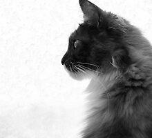 Cat at the window by elainejhillson