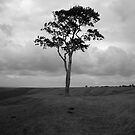Tree by Stevie B