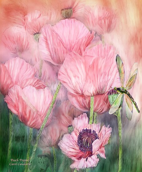 Dragonfly On Peach Poppies by Carol  Cavalaris
