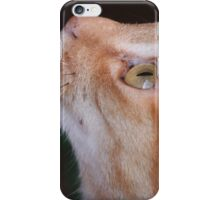 Puss Puss: I'm Here Too! iPhone Case/Skin