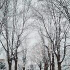 Snow. Brookline MA by LudaNayvelt