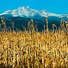 Winter Corn Fields and Longs Peak by Greg Summers