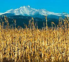 Winter Corn Fields and Longs Peak by nikongreg