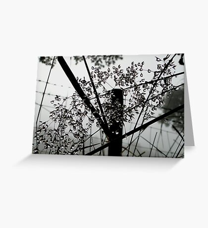 The Dew Drops Greeting Card