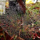 Water Wheel Web... by debsphotos