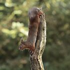 Squirrel - upside down by moonunit