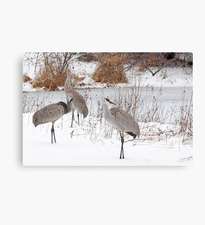 Welcome Back ! Canvas Print