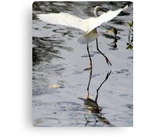 Dance of the Great Egret Canvas Print
