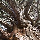 Branching Out by Michelle Brandt