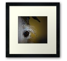 iBrow Framed Print