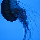 Blue Jelly by KimSha