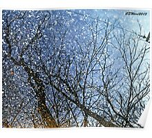 Reflections in a Puddle Poster