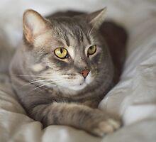 Desert Cat by SB  Sullivan