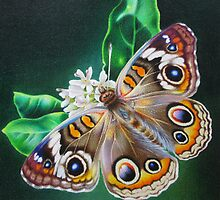 Buckeye Butterfly by lanadi