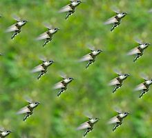 Flight of the Hummers by Carolyn Clark