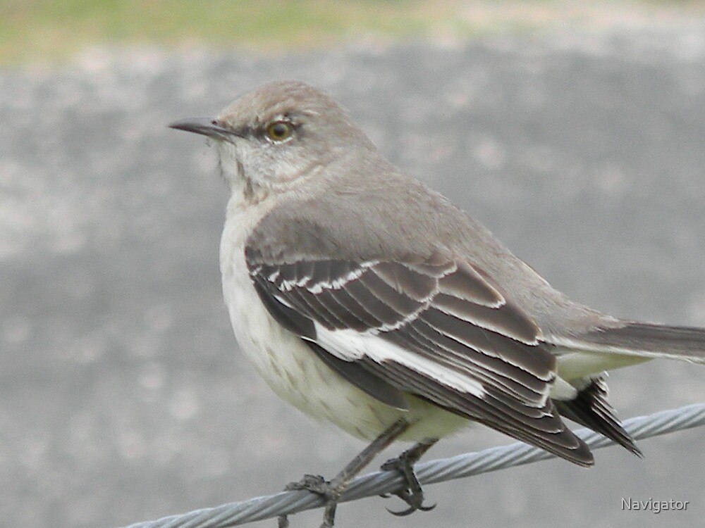 Mockingbird Approach by Navigator