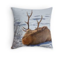 Hey Mikey...pull on his Antlers! Throw Pillow
