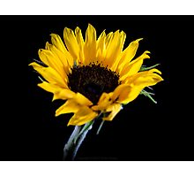 Ah! Sunflower Photographic Print