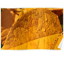 yellow autumn leaf Poster