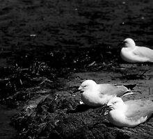 Gulls ... by Erin Davis