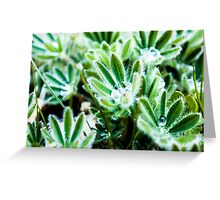 Water Drop on Lupin Leaves Greeting Card