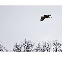 Soaring Over The Marsh Photographic Print