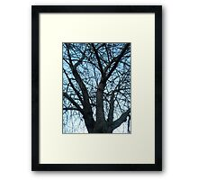 An old tree Framed Print