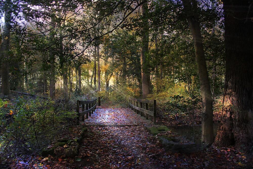 Beyond the wooden bridge by John Rivera