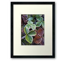 A hard frost Framed Print