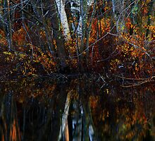 Birch Reflections by Nazareth