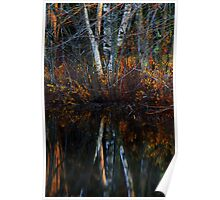 Birch Reflections Poster