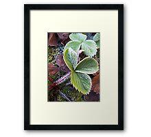 Frozen leaves Framed Print