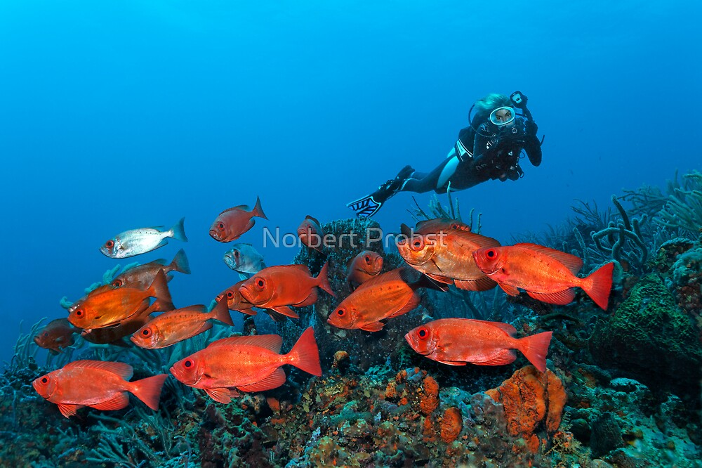 Lady with Reds by Norbert Probst