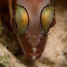 Big eyes, small fish by Philmed