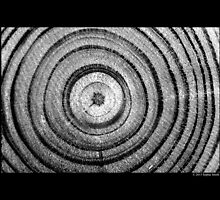 Dendrochronology - Tree Rings by © Sophie W. Smith