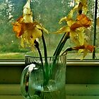 Daffodils In The Window Sill by thepouring
