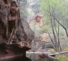 Oak Creek Canyon by Andrew Hogarth