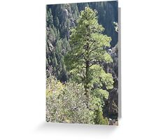 Grand Canyon Pine Greeting Card