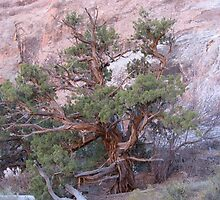 Odd Old Pine at Arches National Park by Andrew Hogarth