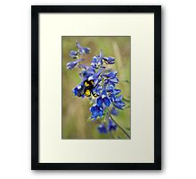 Bumble Bee On Larkspur Framed Print