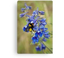 Bumble Bee On Larkspur Canvas Print