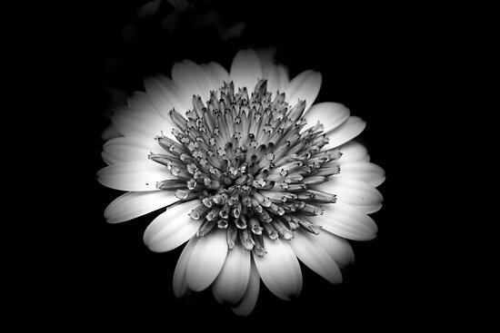 *Beauty in Black & White* by DeeZ (D L Honeycutt)