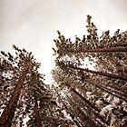 Tahoe Snow by Jake Junge