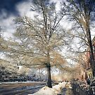 Brookline, MA. Just another winter day. by LudaNayvelt