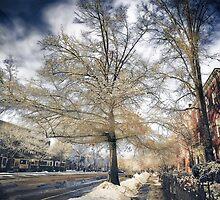Brookline, MA. Just another winter day. by LudaNayvelt