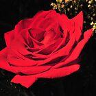 a rose in rosemount by deville