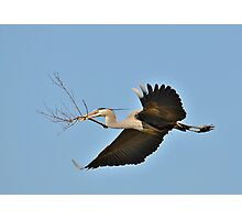 Collecting Nest Materials Photographic Print