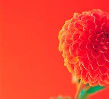 Pink Pixel by mechelen