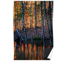 Last Light of the Day Falling on a Beaver Pond Poster