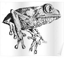 Beautiful perching frog Poster